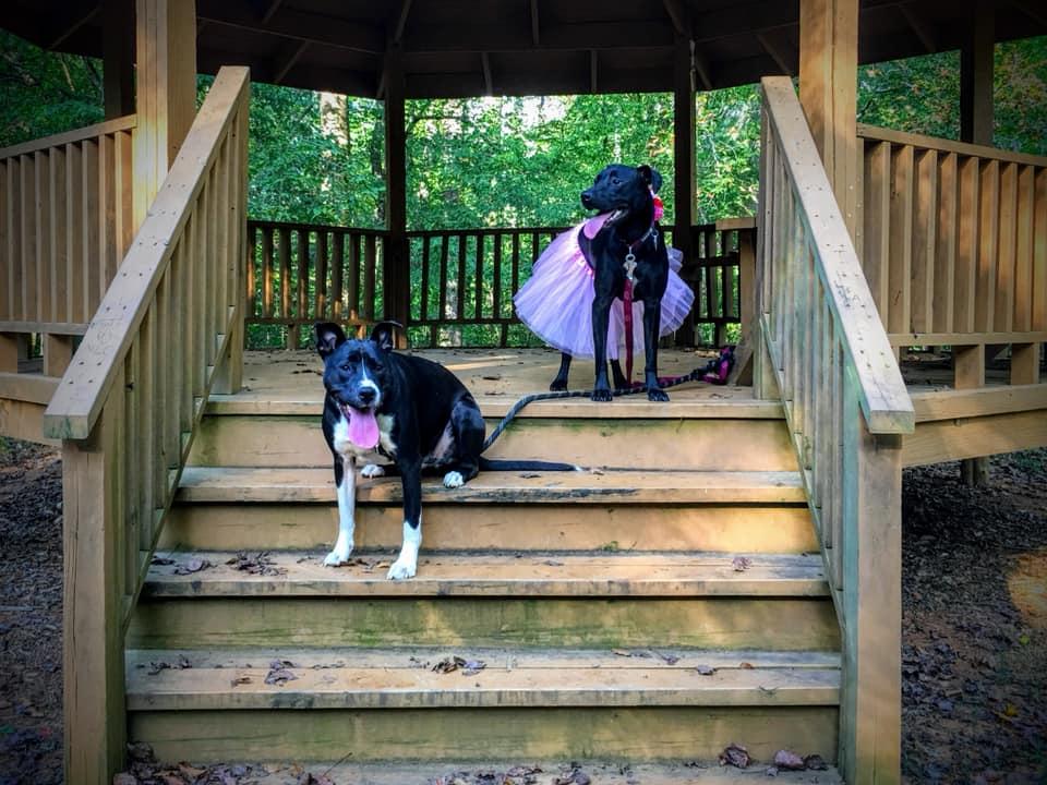 Dogs at Cedarock Park