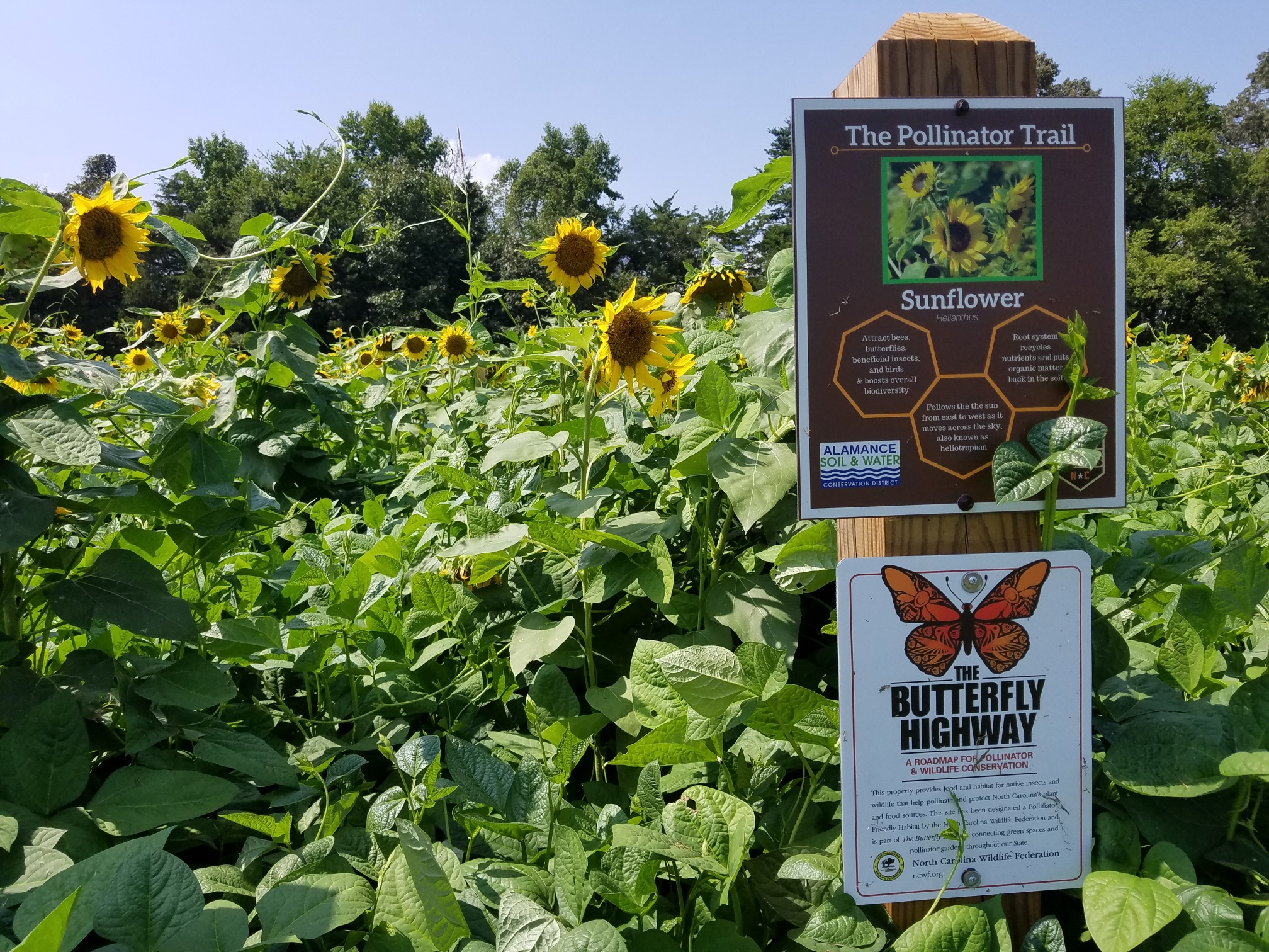 Butterfly Hwy sign Aug 16 2018